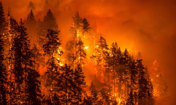 What You Need to Know When You Live in a Wildfire Zone
